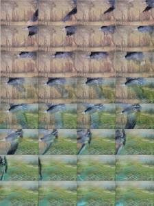 tbird-pg3b