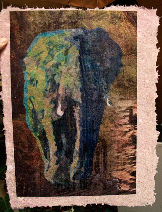 elephant print on cattail paper